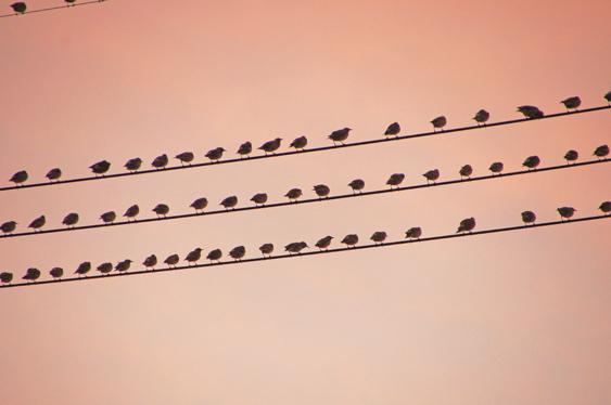 鳥の大群を見て、SDGsを思う_c0139591_01543972.jpg