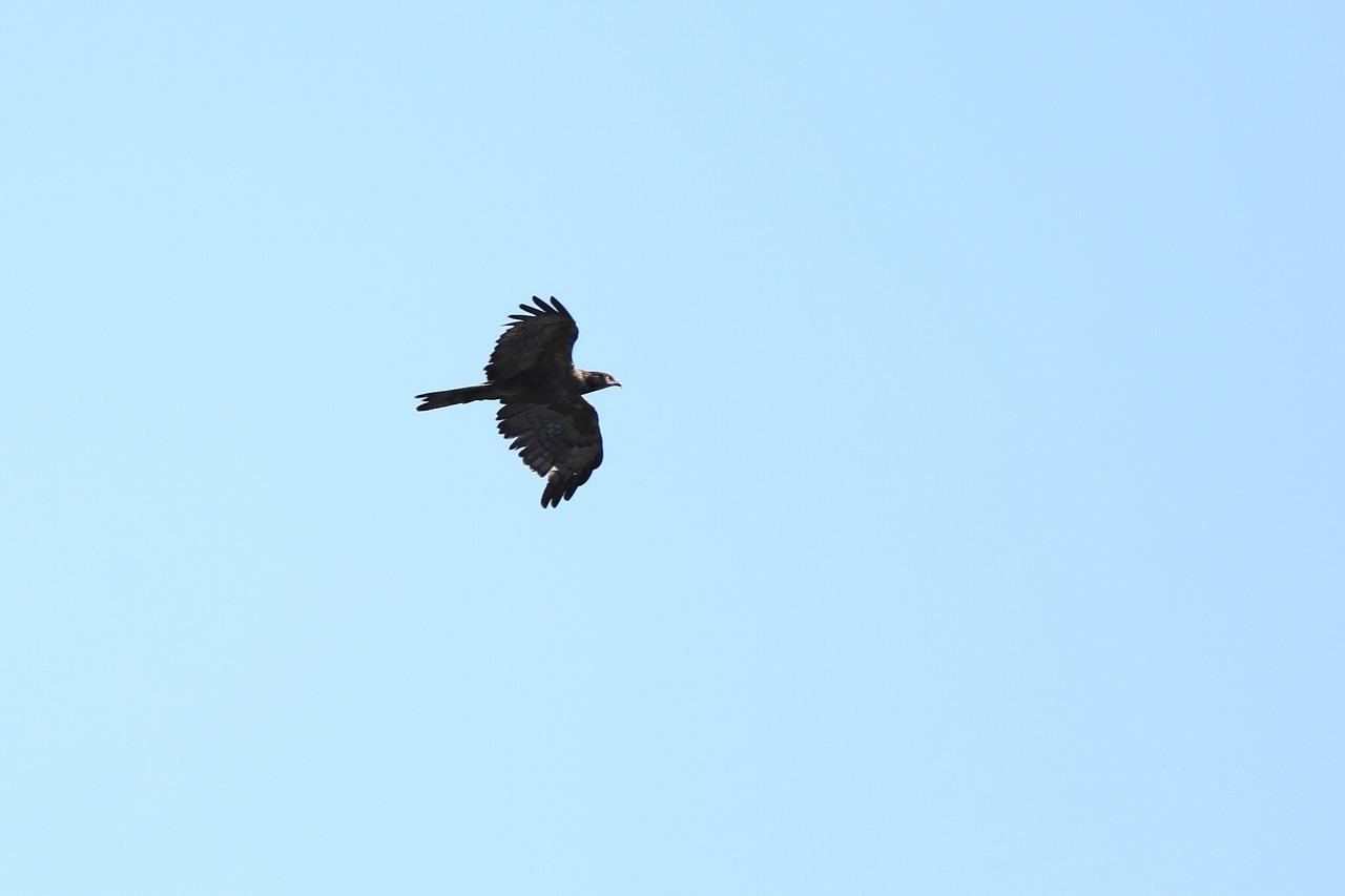 鷹の渡り_f0296999_17080864.jpg