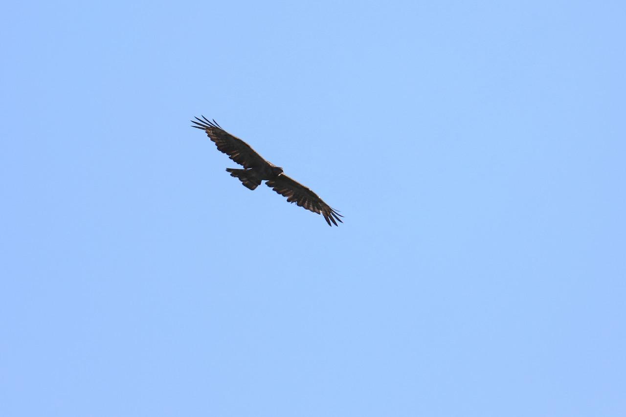 鷹の渡り_f0296999_17081677.jpg