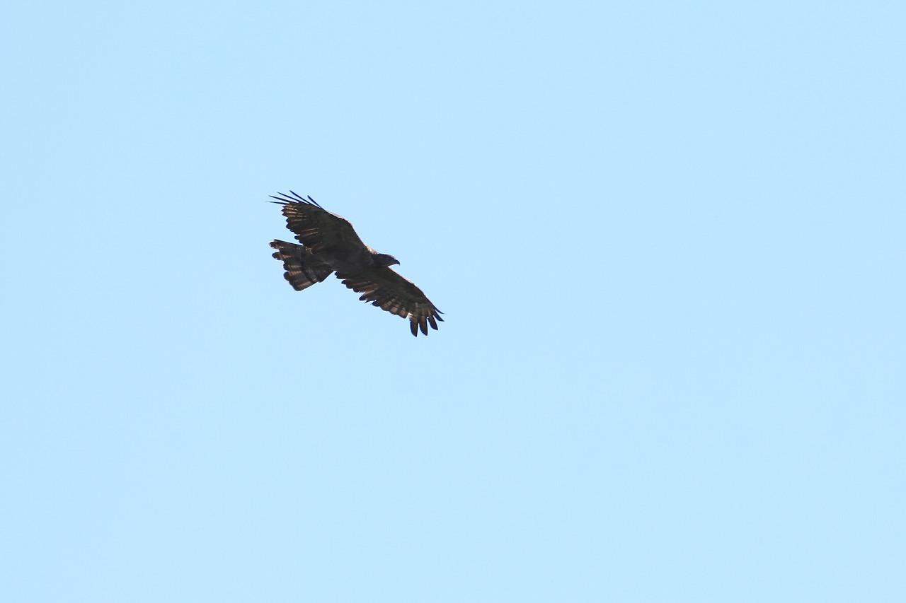 鷹の渡り_f0296999_17082307.jpg