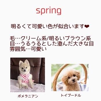ワンちゃんのパーソナルカラー♡ ワンちゃんだって素敵に見られたい!!_f0249610_10161828.jpg