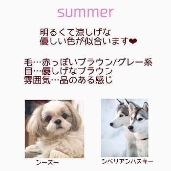 ワンちゃんのパーソナルカラー♡ ワンちゃんだって素敵に見られたい!!_f0249610_10161864.jpg