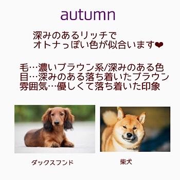 ワンちゃんのパーソナルカラー♡ ワンちゃんだって素敵に見られたい!!_f0249610_10161943.jpg