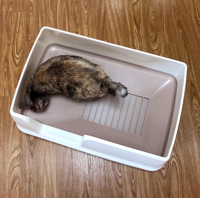 【猫の室内飼いの工夫】巨大猫トイレ1:デオトイレ快適ワイド_a0233917_1302416.jpg