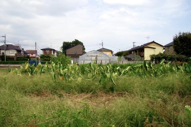 近郊農業 : 「シュクレはお留守番」スナップ日記