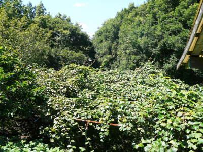 水源キウイ 完全無農薬栽培の熊本産キウイフルーツ!11月下旬の収穫に向け順調に(?)成長中!_a0254656_17425527.jpg
