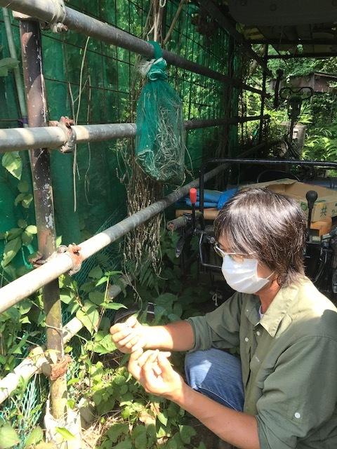 大平農場の兄弟子に鎌倉大根の種提供9・5_c0014967_17220464.jpg