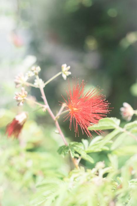 イソギンチャクの花。_b0022268_18292804.jpg