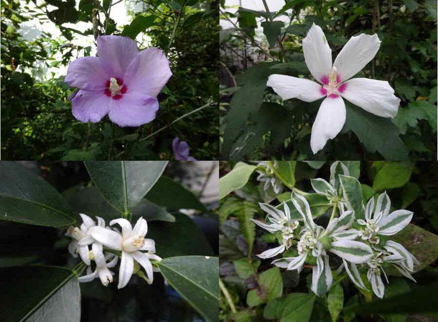 庭の花 夏その10_f0059673_18370130.jpg
