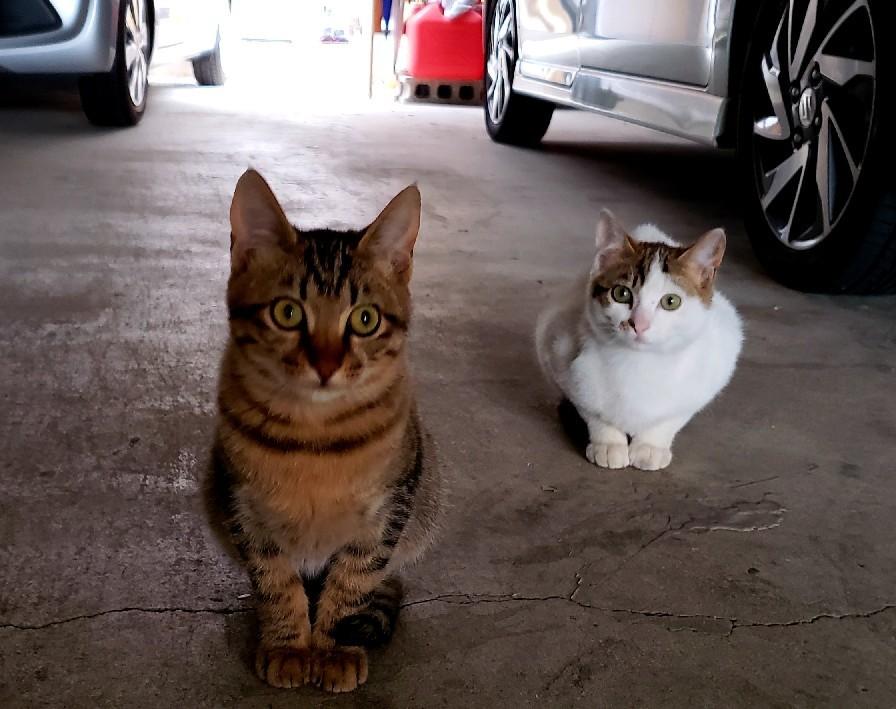 ある外猫の独白_c0193077_12091226.jpg