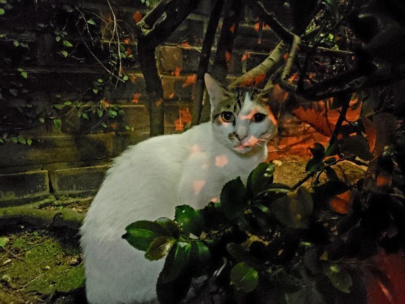 ある外猫の独白_c0193077_12091261.jpg