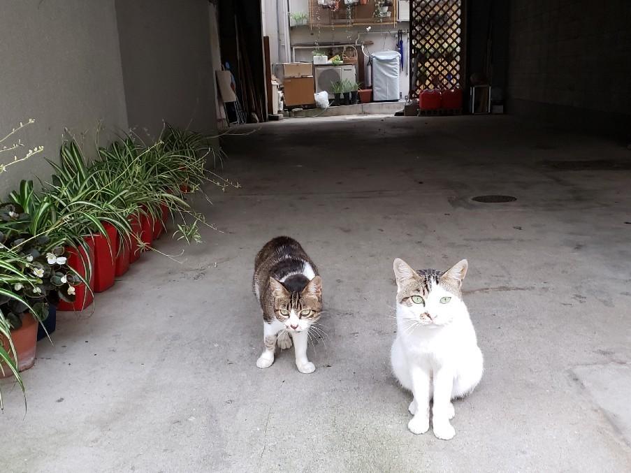 ある外猫の独白_c0193077_12091277.jpg