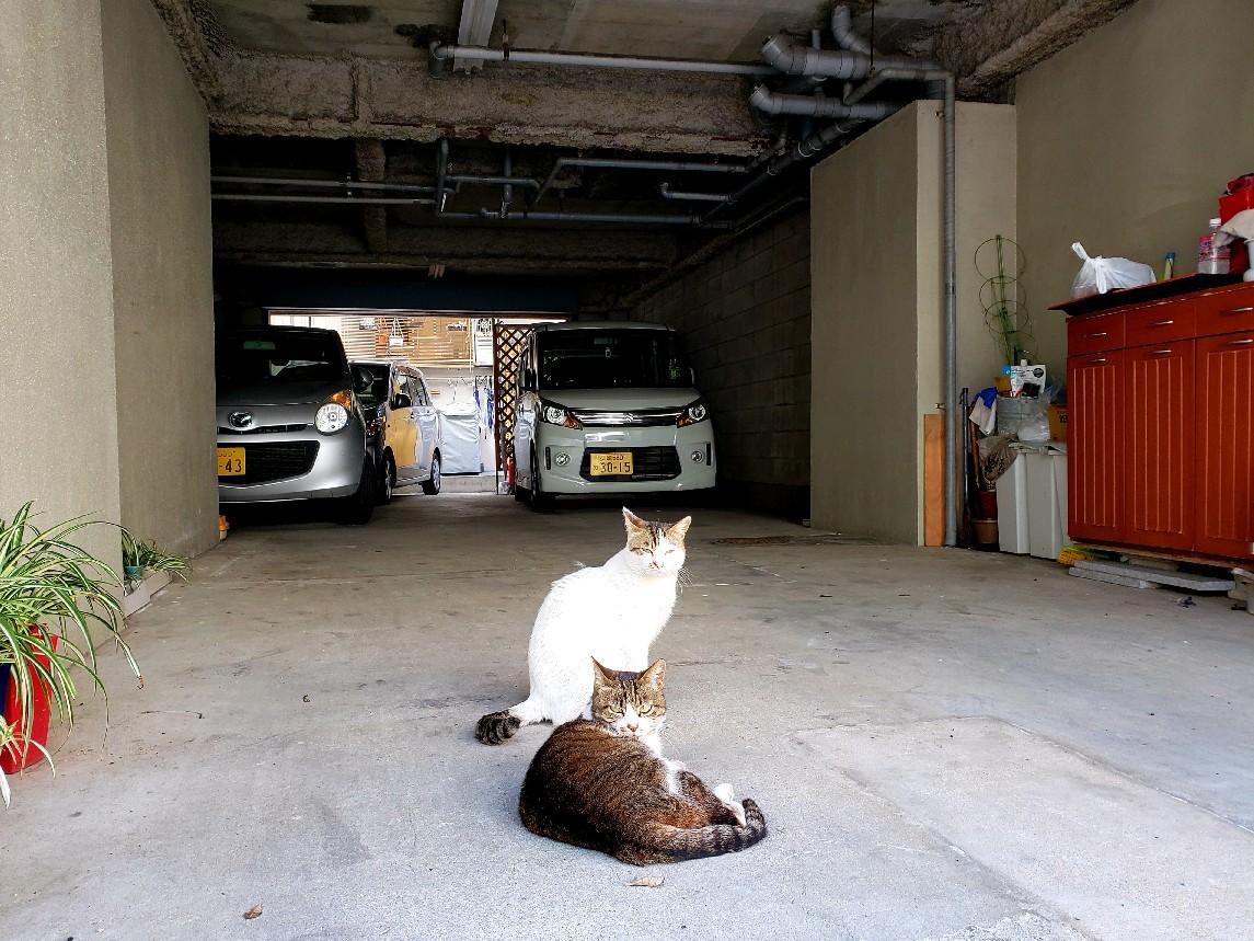 ある外猫の独白_c0193077_12091304.jpg