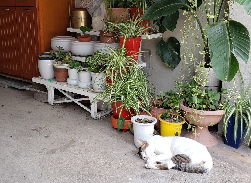 ある外猫の独白_c0193077_12091384.jpg