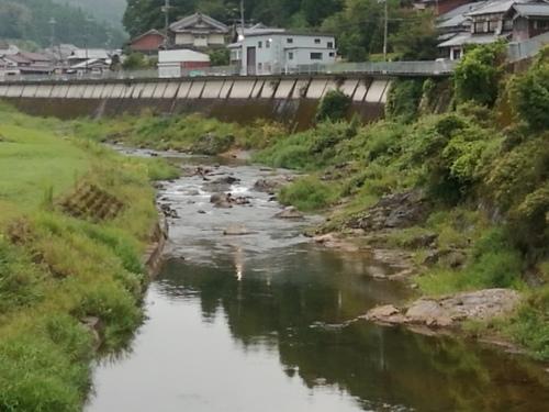 2020/9/5    水位観測  (槻の木橋より)_b0111189_05473475.jpg