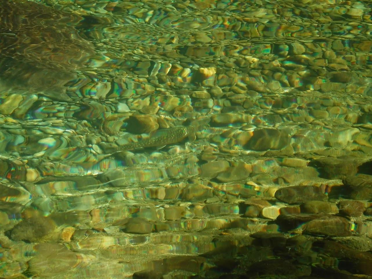 夏の終わりに余別川で沢登り_d0198793_00425182.jpg