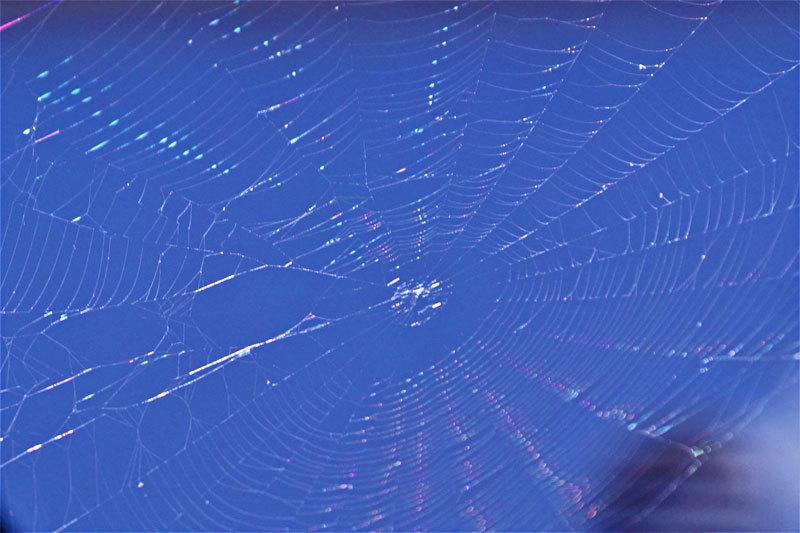 蜘蛛の巣_d0162994_08362573.jpg