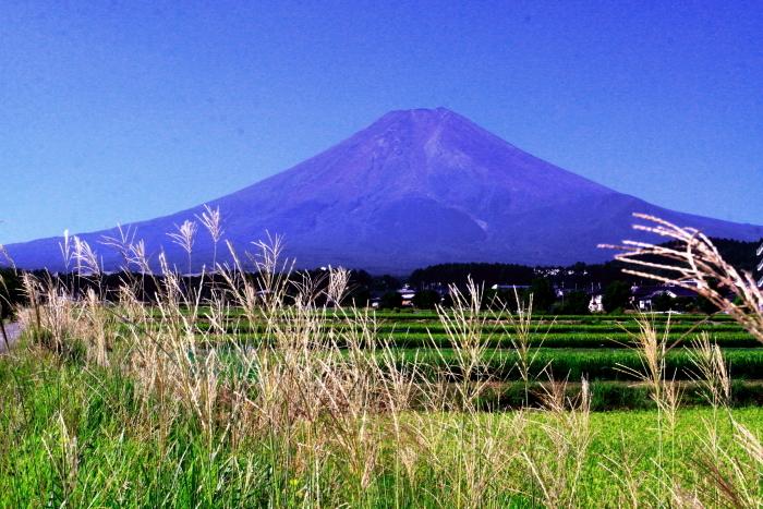 令和2年8月の富士(16) 富士北麓の田園の富士 _e0344396_12212308.jpg
