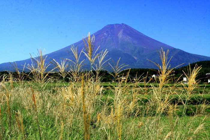 令和2年8月の富士(16) 富士北麓の田園の富士 _e0344396_12212452.jpg