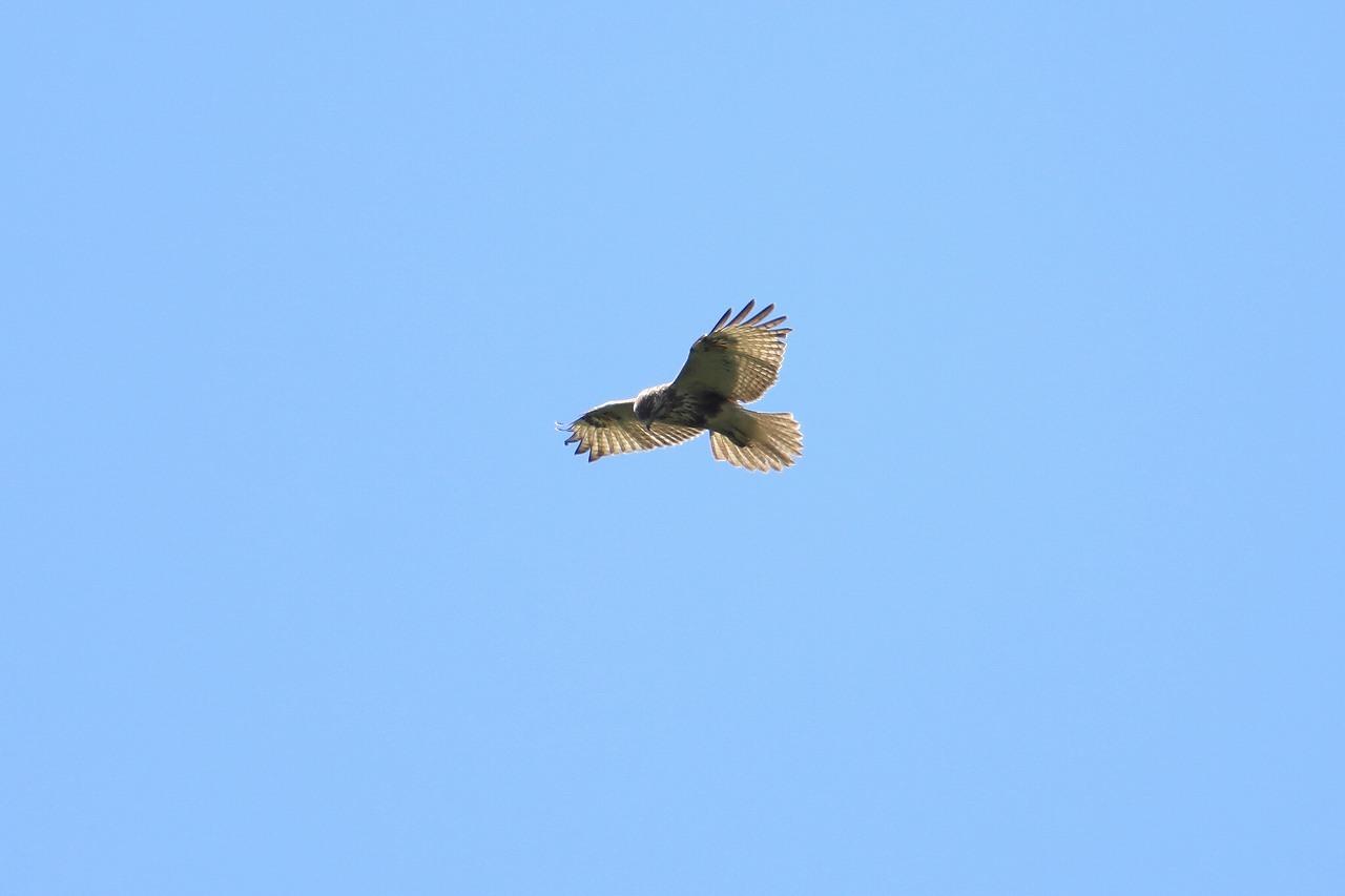 鷹の渡り_f0296999_13293820.jpg