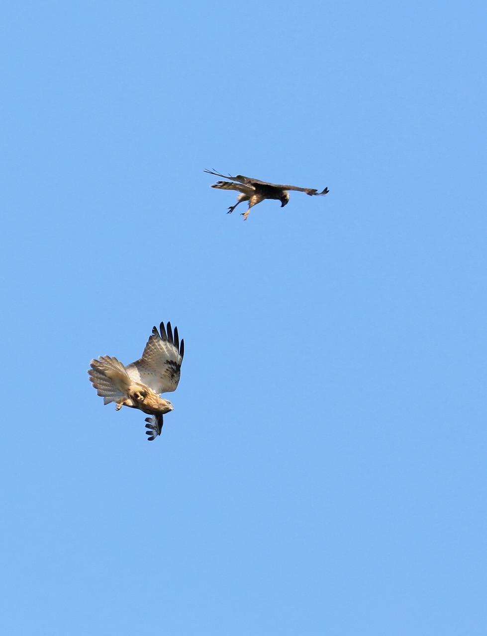 鷹の渡り_f0296999_13294334.jpg