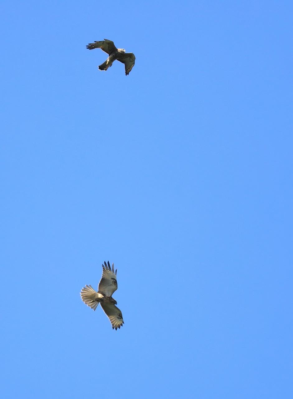 鷹の渡り_f0296999_13295888.jpg