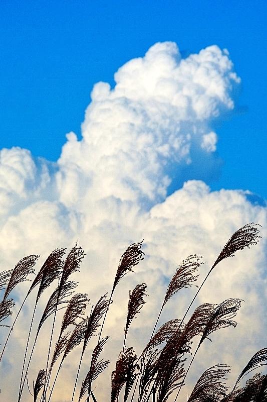 昔の秋見っけ④ こんな空を見た_b0314043_09551592.jpg