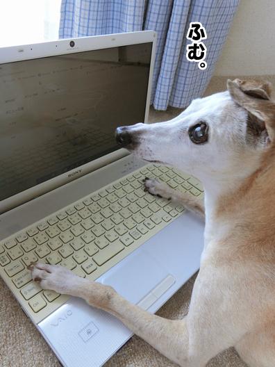 【お知らせ】ルビんちのブログが引っ越すよ。_b0234654_16480332.jpg