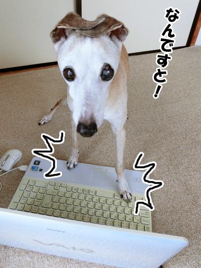 【お知らせ】ルビんちのブログが引っ越すよ。_b0234654_16481133.jpg
