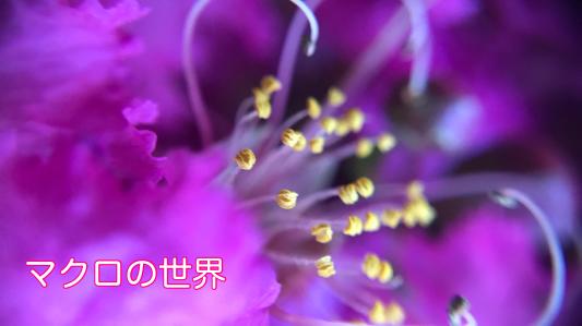 庭の花 マクロの世界_c0203062_00073440.jpeg