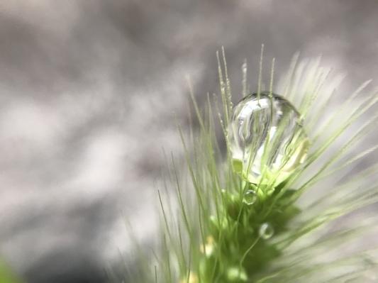 庭の花 マクロの世界_c0203062_00081734.jpeg