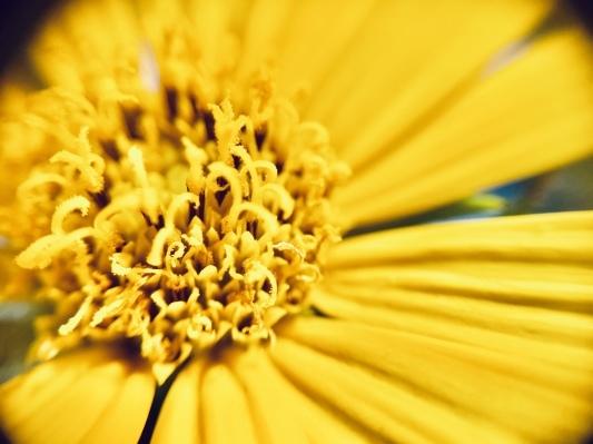 庭の花 マクロの世界_c0203062_00100327.jpeg