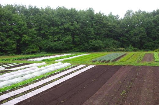 9月初旬の畑。_c0110869_12233349.jpg