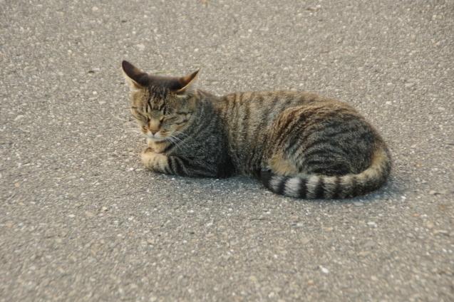 9月6日猫ちゃんが一休み_d0034980_19101847.jpg