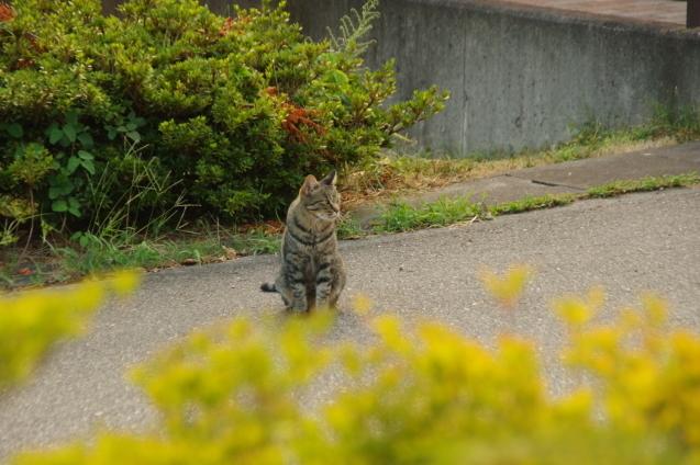9月6日猫ちゃんが一休み_d0034980_19130785.jpg
