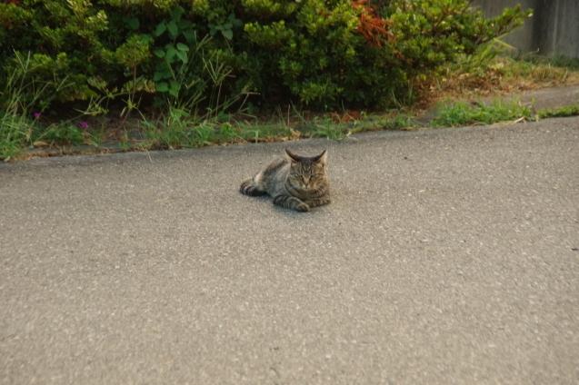 9月6日猫ちゃんが一休み_d0034980_19133910.jpg