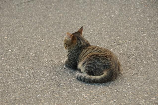 9月6日猫ちゃんが一休み_d0034980_19144472.jpg