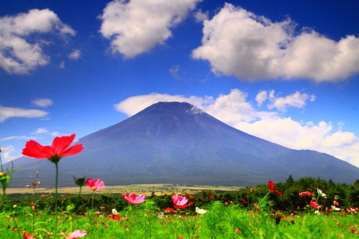 令和2年8月の富士(18) 花の都公園コスモスと富士 _e0344396_17164245.jpg