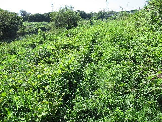 写真をアップし改めて 「とにかくバテた! 蒸し暑い中、滝川でヒガンバナの開花の前の草刈り清掃」_f0141310_20572296.jpg