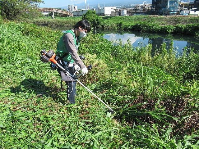 写真をアップし改めて 「とにかくバテた! 蒸し暑い中、滝川でヒガンバナの開花の前の草刈り清掃」_f0141310_20573012.jpg
