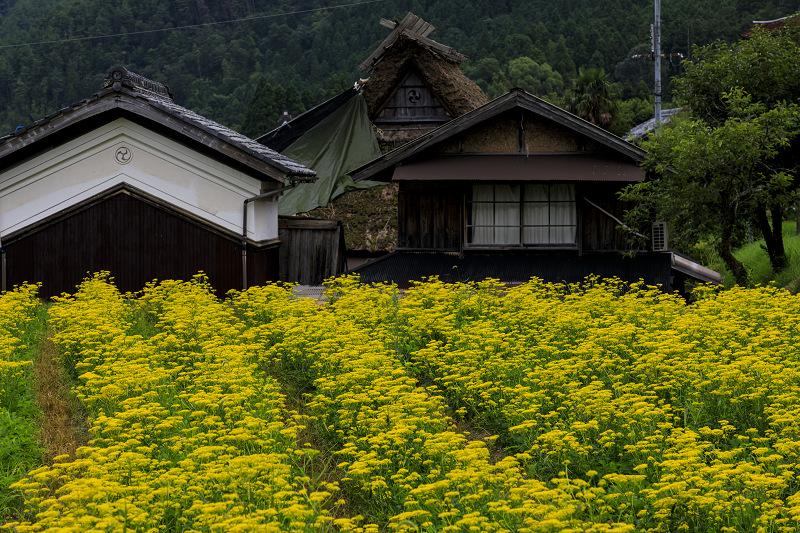 越畑の女郎花と夏の花々_f0155048_2303752.jpg