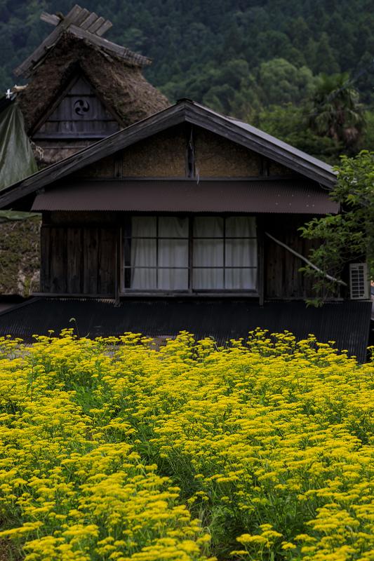 越畑の女郎花と夏の花々_f0155048_2305344.jpg