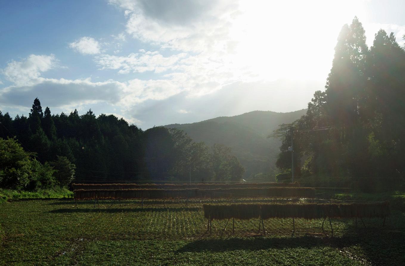 今年の稲刈り始まりました。_d0231263_23205523.jpg