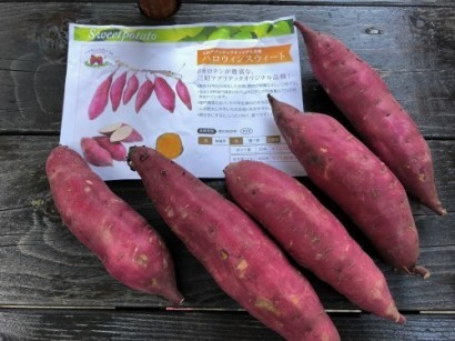 葡萄とお芋の物々交換_a0346704_20024641.jpg