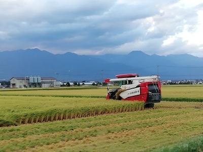 収穫の季節_c0289116_19321306.jpg