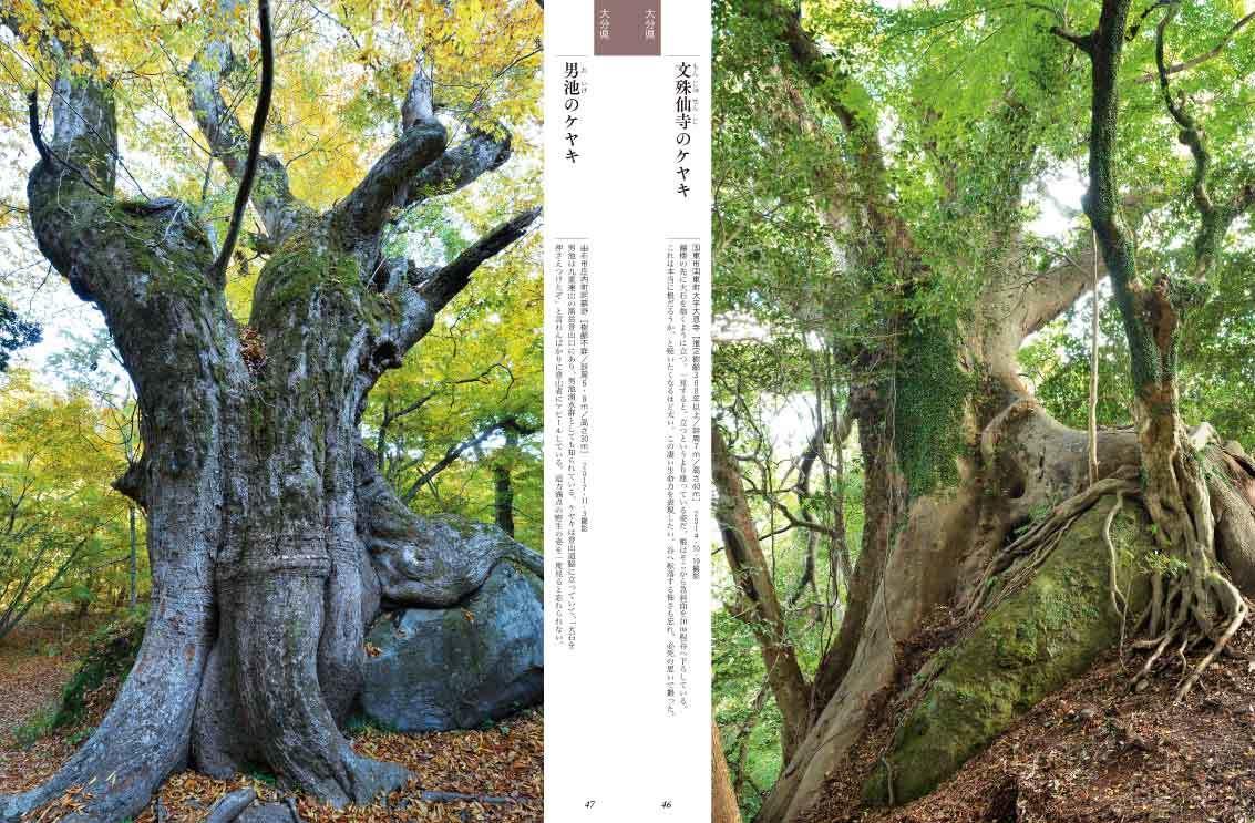 ■「巨樹にカメラを向ける時、ドキドキしませんでしたか?」──榊晃写真集『九州・沖縄の巨樹』に寄せられた声_d0190217_23025406.jpg