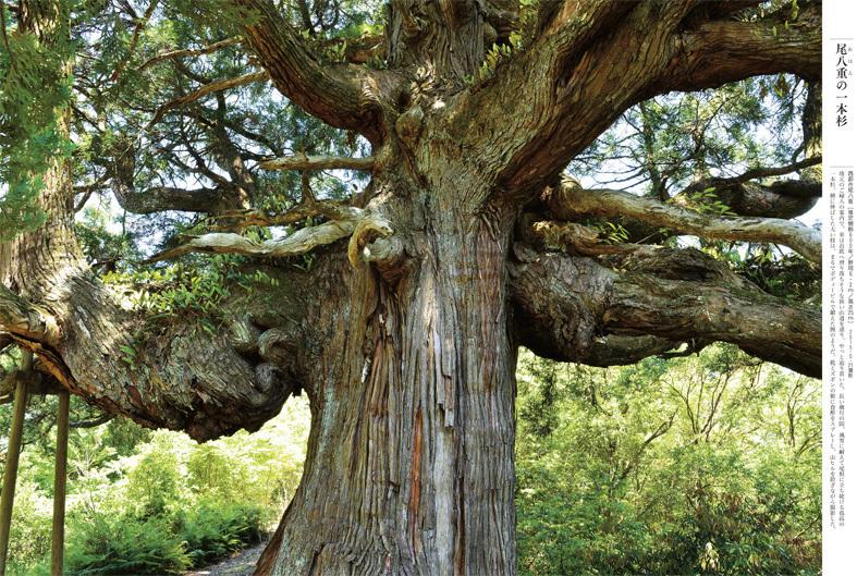 ■「巨樹にカメラを向ける時、ドキドキしませんでしたか?」──榊晃写真集『九州・沖縄の巨樹』に寄せられた声_d0190217_23034404.jpg