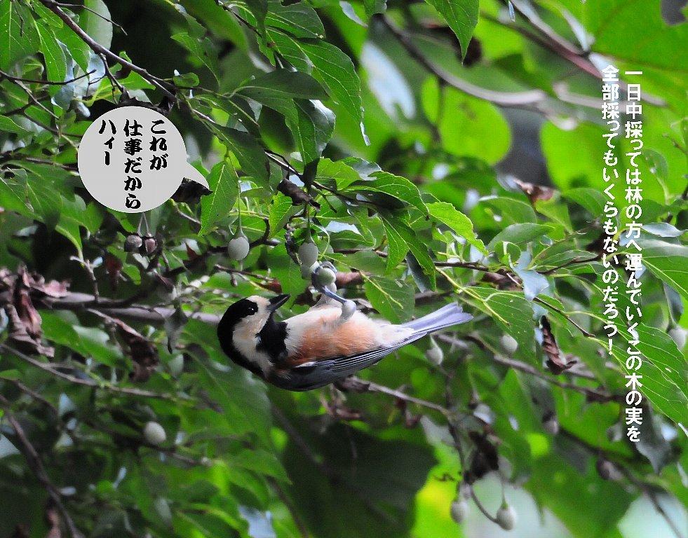 とにかく確実な鳥の居る所に行って来ました!_b0404848_19202921.jpg