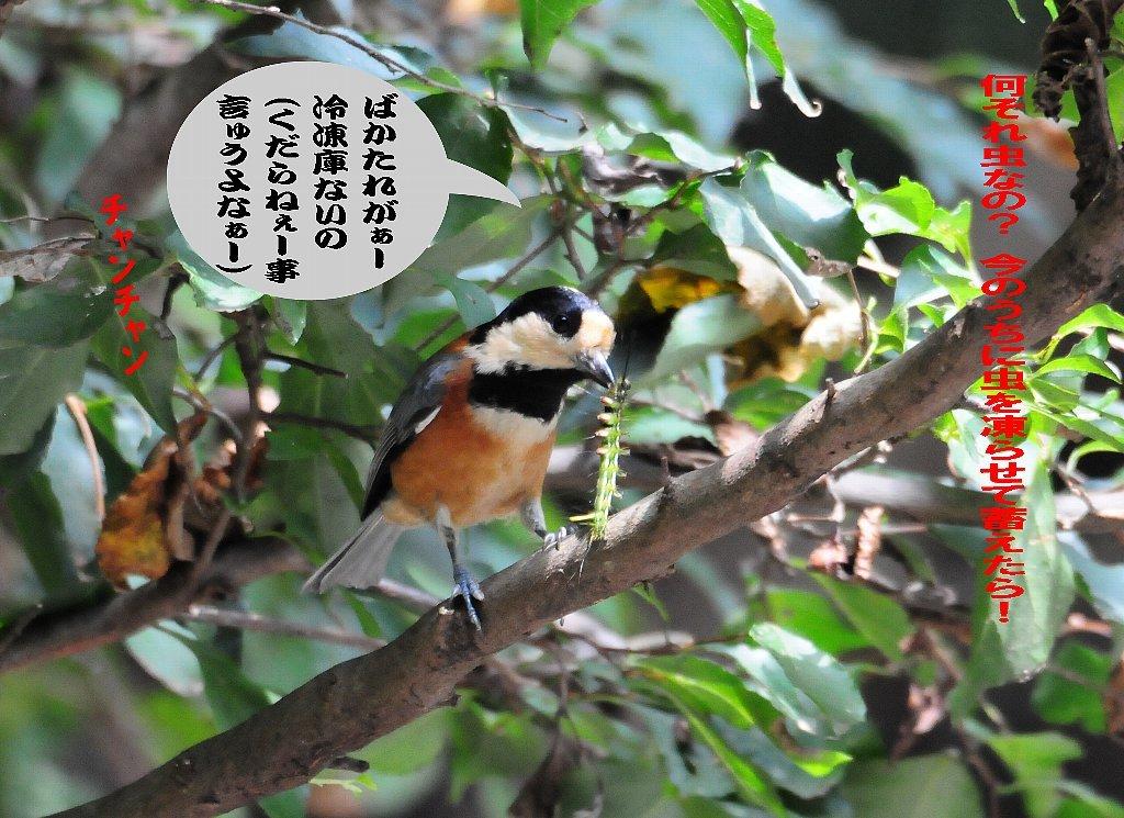 とにかく確実な鳥の居る所に行って来ました!_b0404848_19203926.jpg