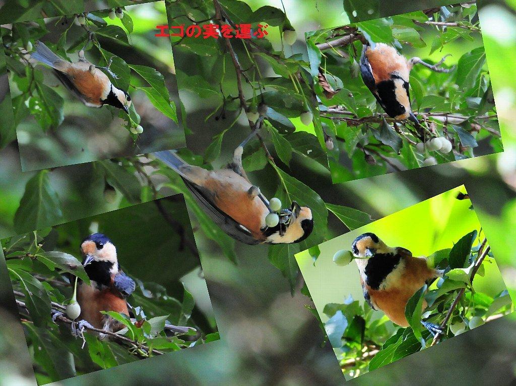 とにかく確実な鳥の居る所に行って来ました!_b0404848_19204600.jpg